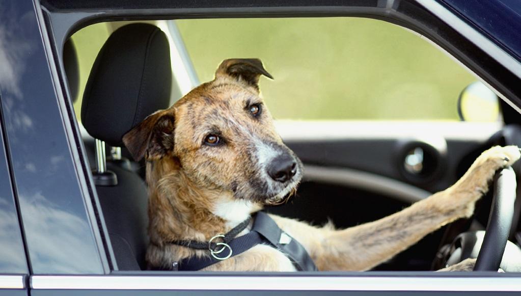 perro conduciendo un MINI 2
