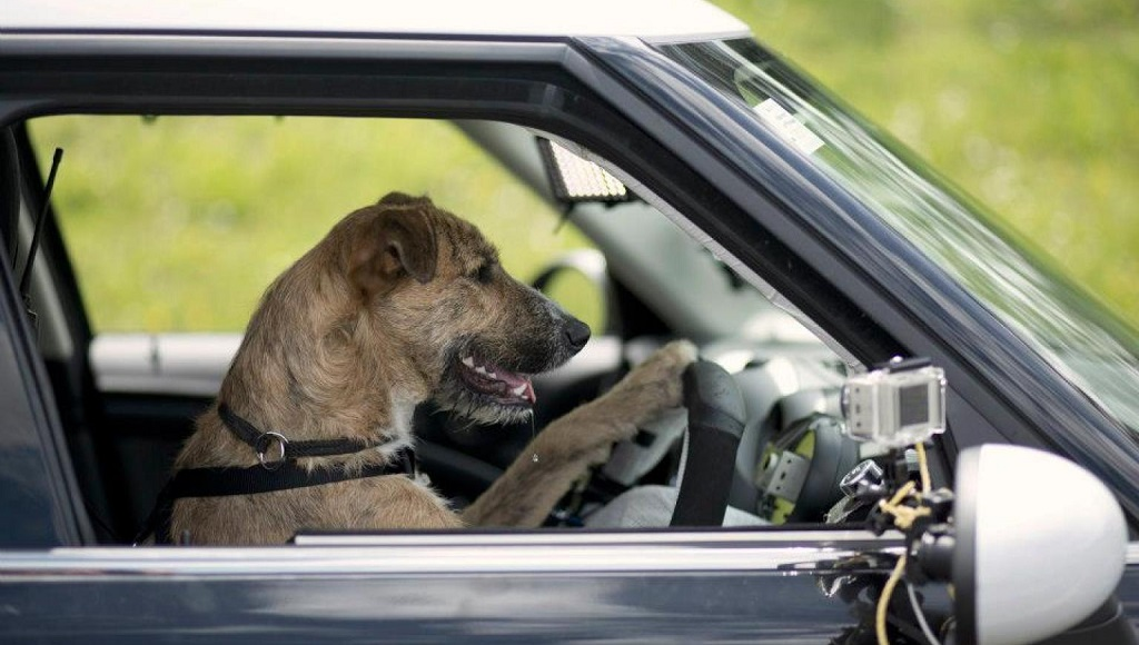perro conduciendo un MINI