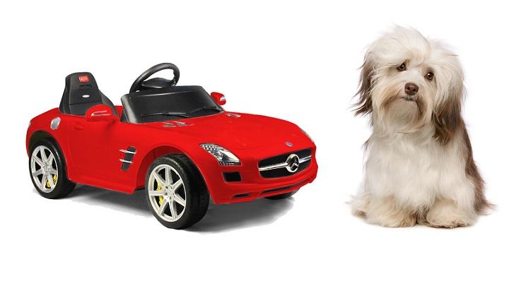 SLS AMG juguete y un perro